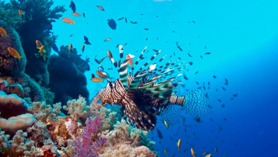 red-sea031