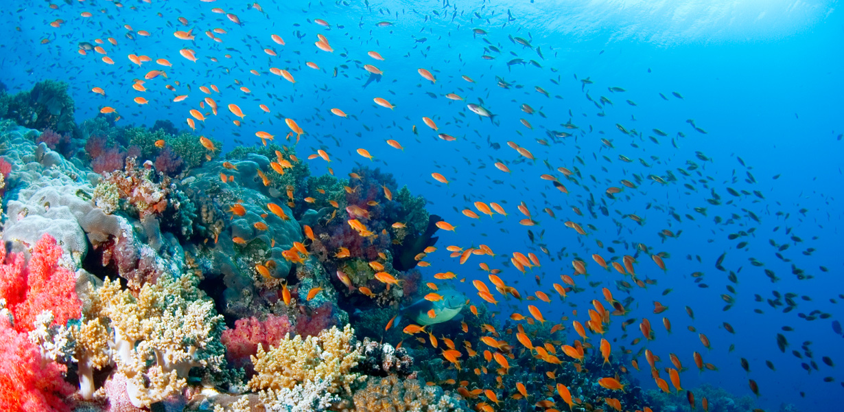 red-sea-discovery05