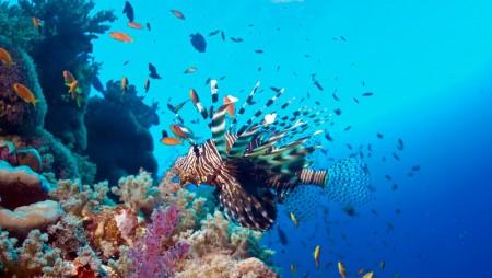 Thomas Reef
